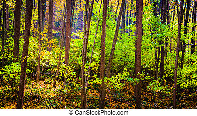 Bright greens in the forest, Gunpowder Falls State Park,...