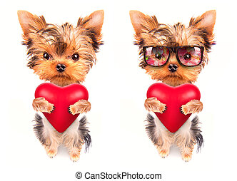 lover valentine puppy dog with a red heart - cute lover...