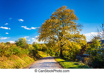 Colorful tree along a country road in rural York County,...