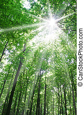 nature - summer nature. sunlight in trees of green forest