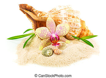 Shells on sand with flower and bamboo isolated on white...
