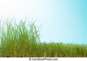 Partially manicured lawn on a blue background