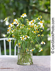 Daisies on the table in the garden.