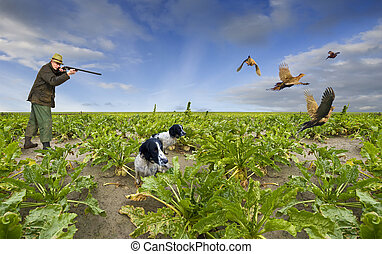 Shooting Pheasants - Hunting scene with a single shooter,...