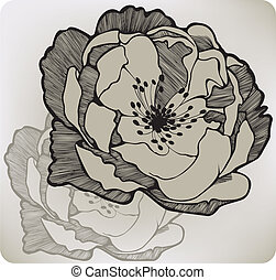 Wild rose flower, hand-drawing