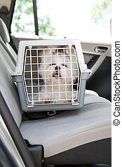 Dog safe in the car - Small dog maltese sitting safe in the...
