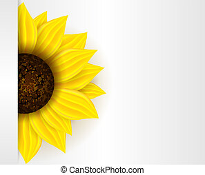 Background with sunflower - Background with part of yellow...