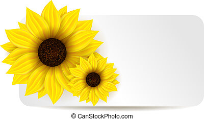 Background with two sunflowers - White banner with two...