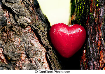 Red heart in a tree trunk Romantic symbol of love,...