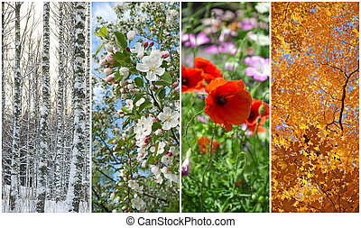 Winter, spring, summer, autumn Four seasons - Nature in...