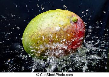 mango and water splash - fresh mango on black background...
