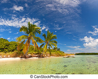 Summer at a tropical paradise in Florida Keys, USA with palm...