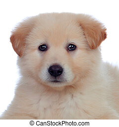 Portrait of adorable puppy dog with smooth hair isolated on...