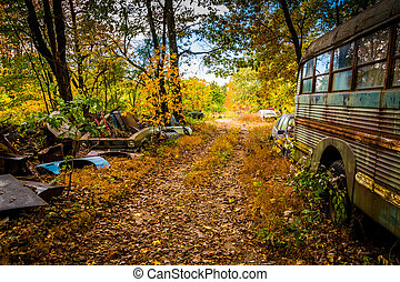 School bus and wrecked cars in a junkyard.