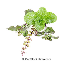 basil tulsi and mint in group - Studio shoot with nikon D90,...