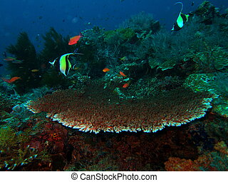 Coral reef with hard coral - Underwater landscape in...