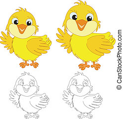 chicks on the white background
