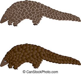 The Pangolin - - vintage engraved illustration