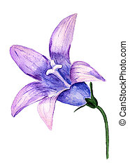 Bluebell - Watercolor image of violet flower of bluebell