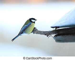 Great tit at a feeding place