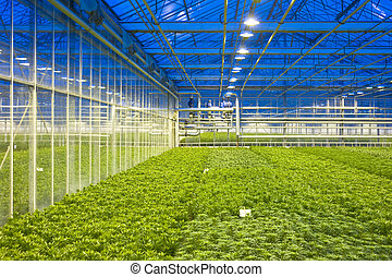 Glasshouse climate control - The tubes and valves,...