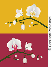 Orchid branch - Budding white orchids on red and yellow...