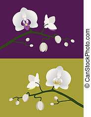 Orchid stem - White orchids with budding stem on purple and...