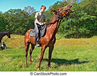 Boy on Horse - The boy on a horse on a wood glade. The horse...