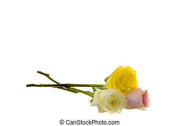Three Long-stem Roses - Pink, white, and Yellow long stem...