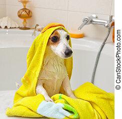 perro, toma, baño, bañera