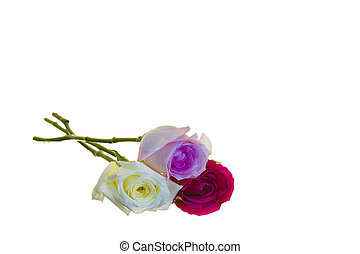 Three Long-stem Roses - Pink, white, and red long stem roses...
