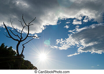 Clouds, Sunshine and Bald tree