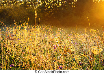 sunrise over a summer blossoming meadow