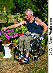 Gardening in Wheelchair - Retired person in a wheelchair...