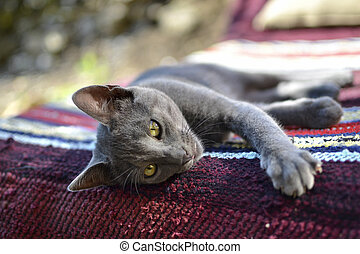 Sleepy gray cat - A sleepy young grey cat laying on bench...