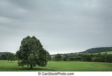 Single tree in a field, England