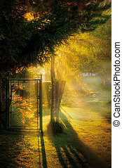 Let the sunshine in - Foggy autumn morning in a park