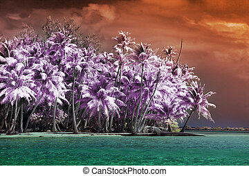 The island with palm trees to the sea, an infrared photo