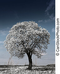 Tree in the field, an infrared photo