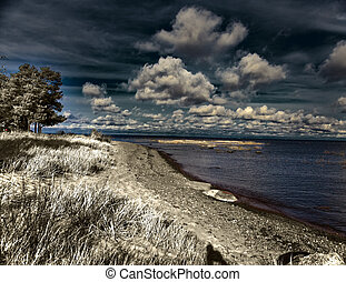 Pine over the sandy coast , an infrared photo