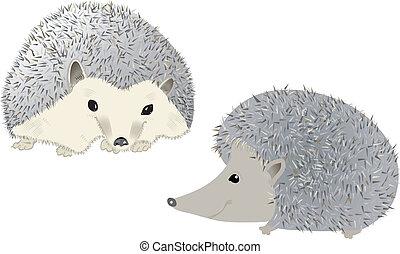 Hedgehogs vector illustration
