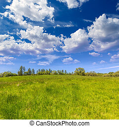 California meadow ranch in a blue sky spring day USA