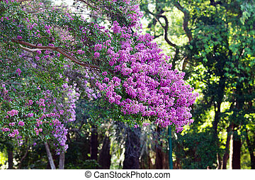 green trees with purple flowers  in the park