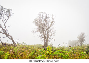 tree in grass field with misty early