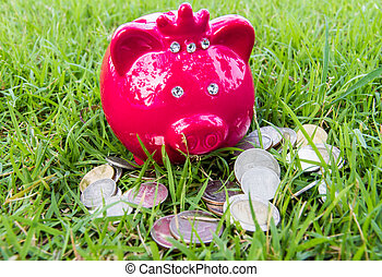 pig bank on grass