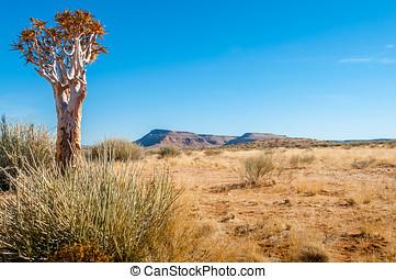 Desert tree - Quiver desert tree