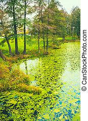 Wild Bog Swamp - Green Wild Bog Swamp. Russian Nature In...
