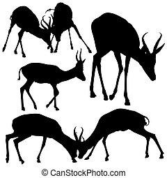 Antelope Silhouettes - Black Illustration, Vector