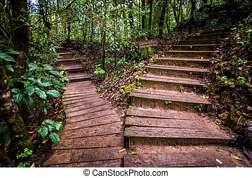 pathway in forest of thailand - wood pathway in rainforest...