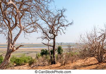 Botswana Nature in Chobe National Park